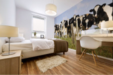 View Of Cows, Bas-Saint-Laurent Region, Quebec, Canada Mural print