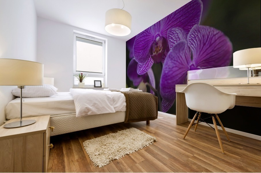 Phalaenopsis orchids in bloom; Kailua, Island of Hawaii, Hawaii, United States of America Mural print