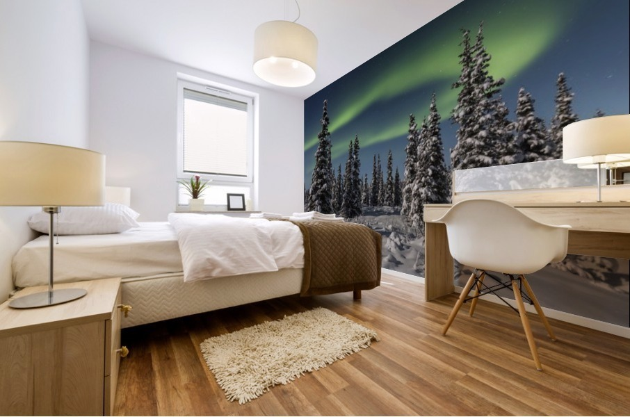 Green Aurora Borealis dances over the tops of snow covered black spruce trees, moonlight casting shadows on a clear winter night, interior Alaska; Gakona, Alaska, United States of America Mural print
