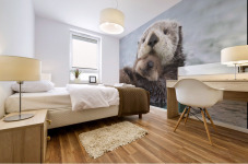 Female Sea Otter Holding Newborn Pup Out Of Water, Prince William Sound, Southcentral Alaska, Winter Mural print