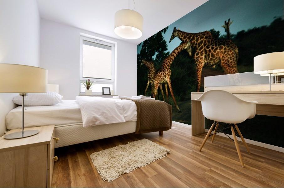 Giraffes South Africa Mural print