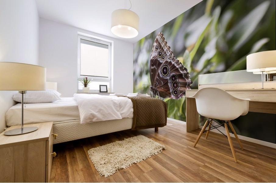 Morpho peleides butterfly Mural print