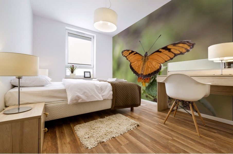 Julia heliconian butterfly Mural print