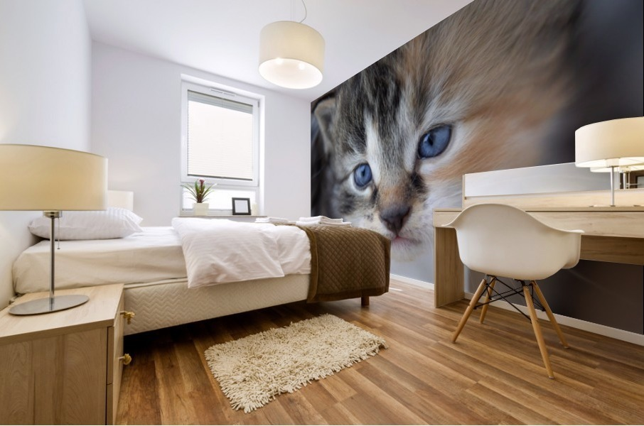 Kitten Face Mural print