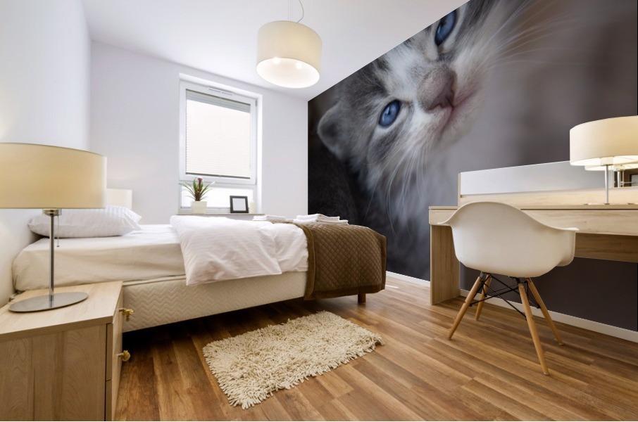 Gray Kitten Mural print