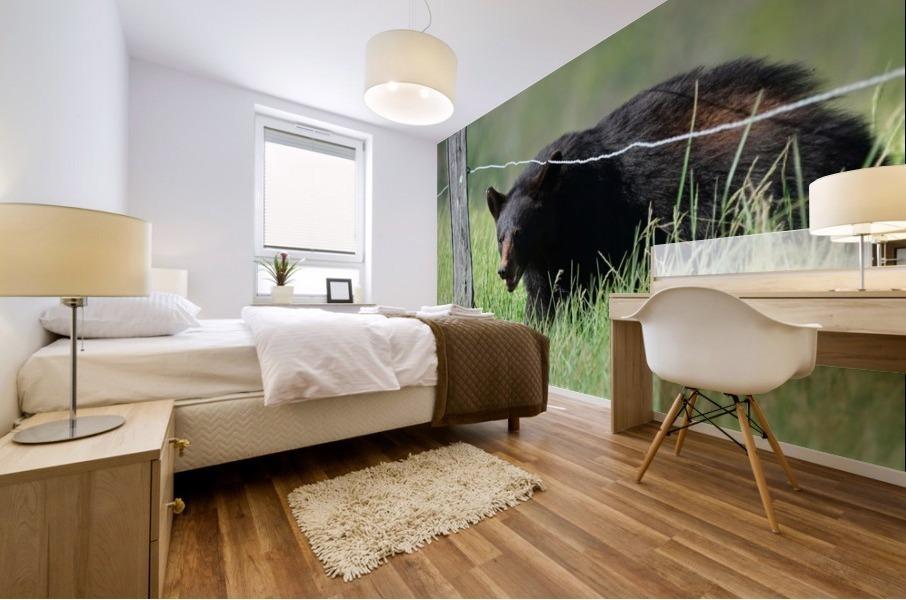 2966-Black Bear Mural print