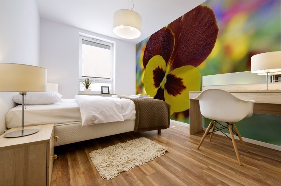 Yellow Pansy Covered In Due Drops Mural print