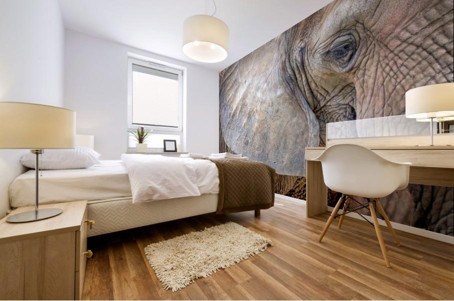 Elephant - APC-186 Mural print