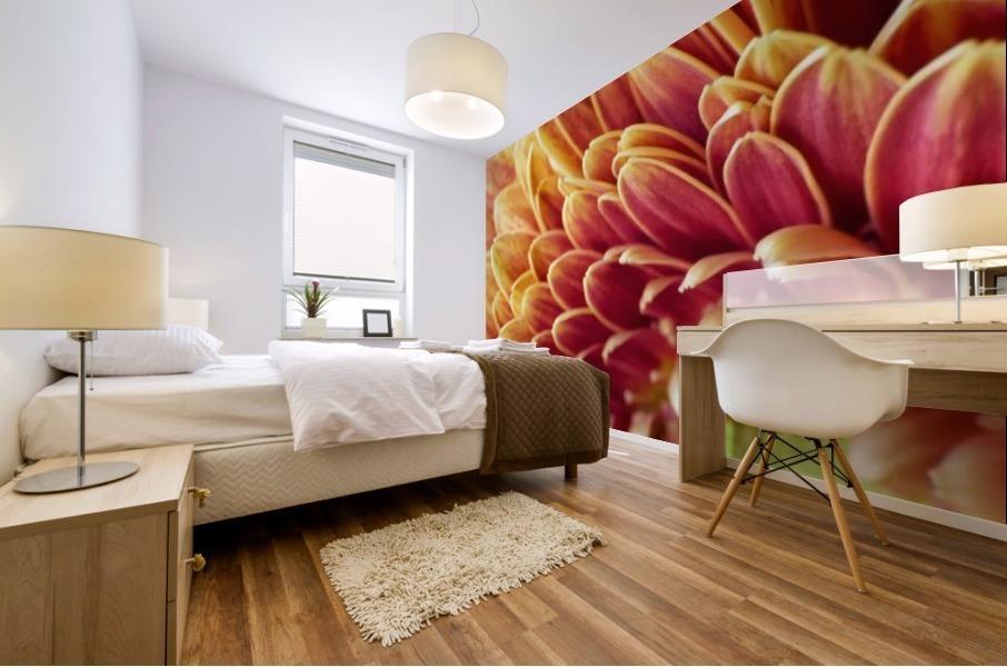 Golden Chrysanthemum Mural print