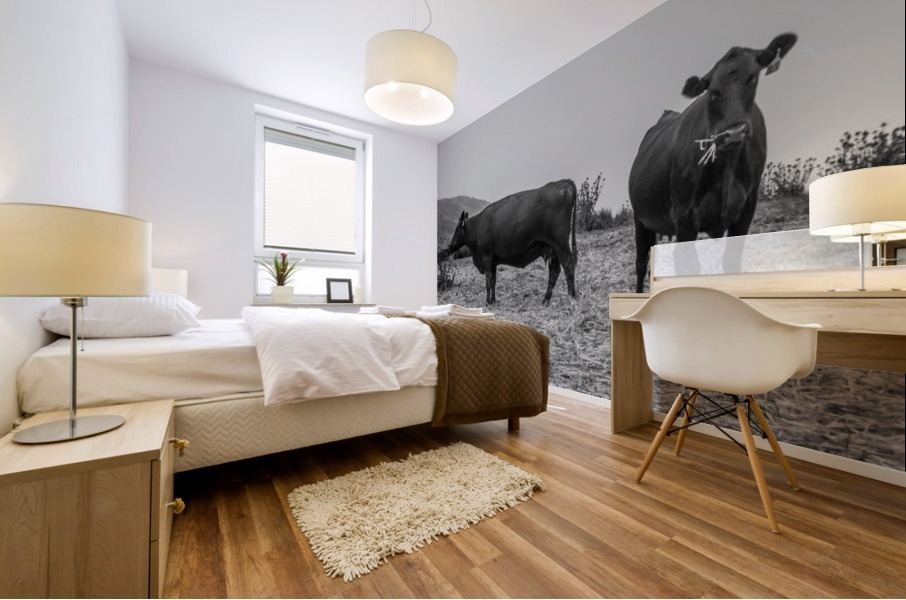 Cows in the mist Mural print