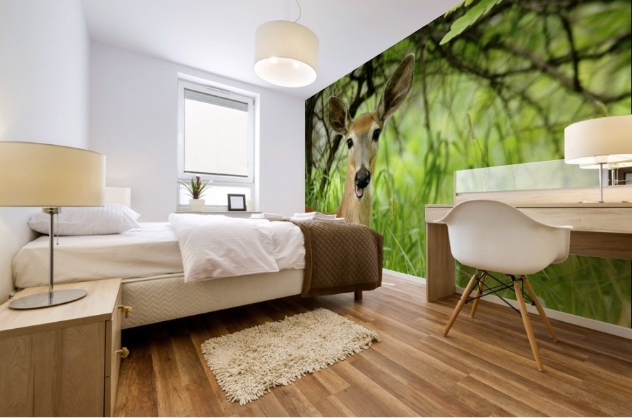 White   Tailed Deer Close Up Mural print