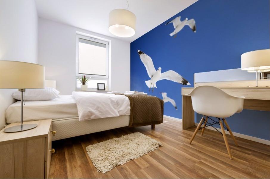 Seagulls Mural print