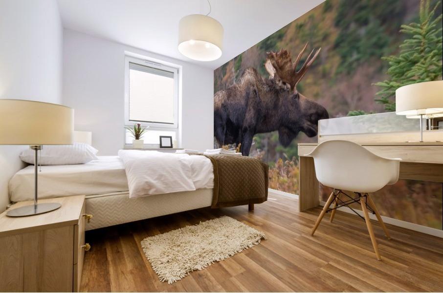 Bull moose on top of Blueberry mountain Cape Breton highlands Mural print