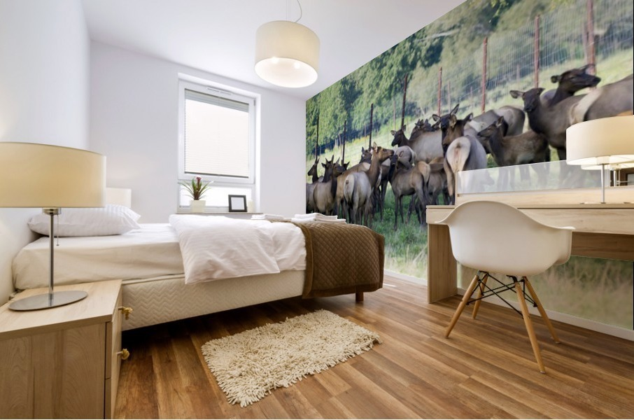 Elk Red Tailed Deer or Wapiti 16 Impression murale