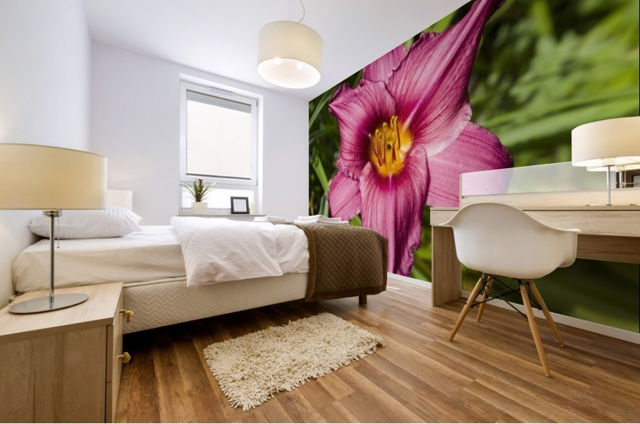 Purple Stella Doro Day Lily Flowers 2 Mural print