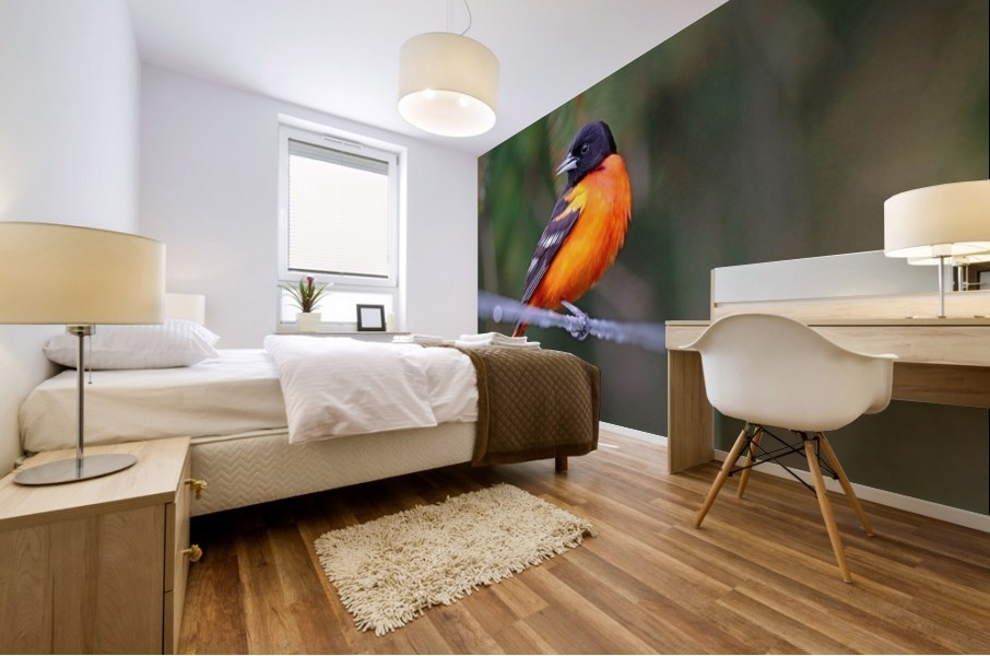 Baltimore Oriole On The Line Mural print