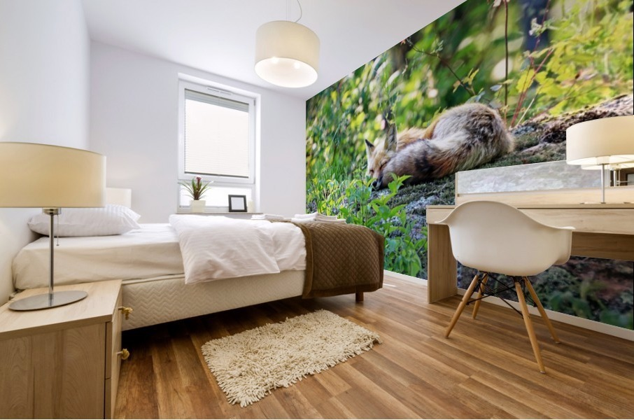 Nap Time For Red Fox I Mural print