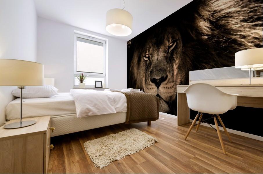 african lion wildcat mane closeup Mural print