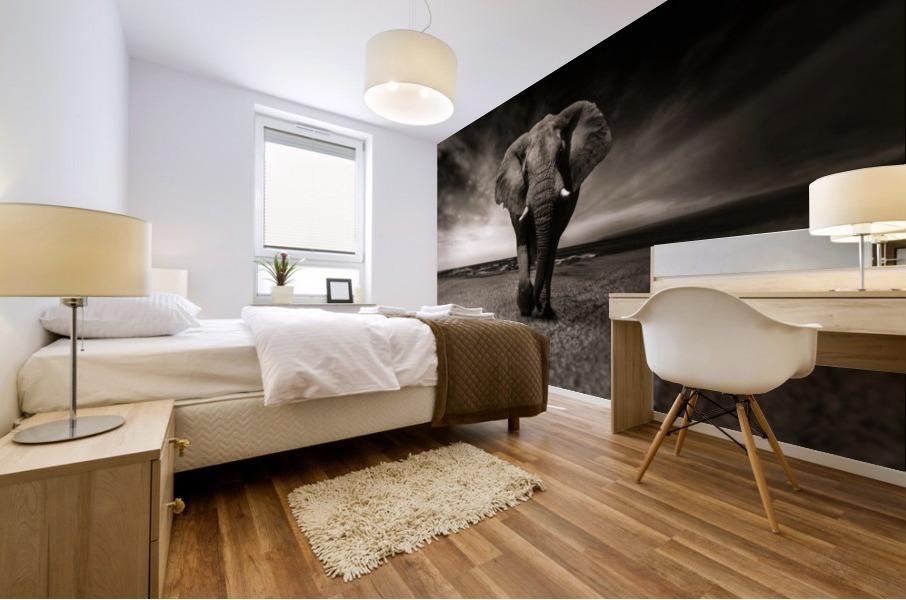 elephant animal africa safari Mural print