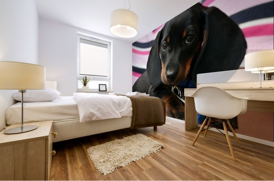 dachshund puppy young animal Mural print