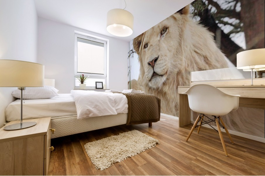 Young White Lion Male Mural print