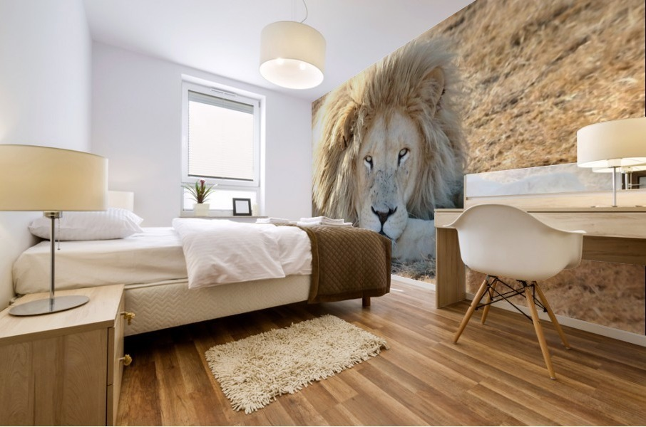 White Lion Portrait 913 Mural print