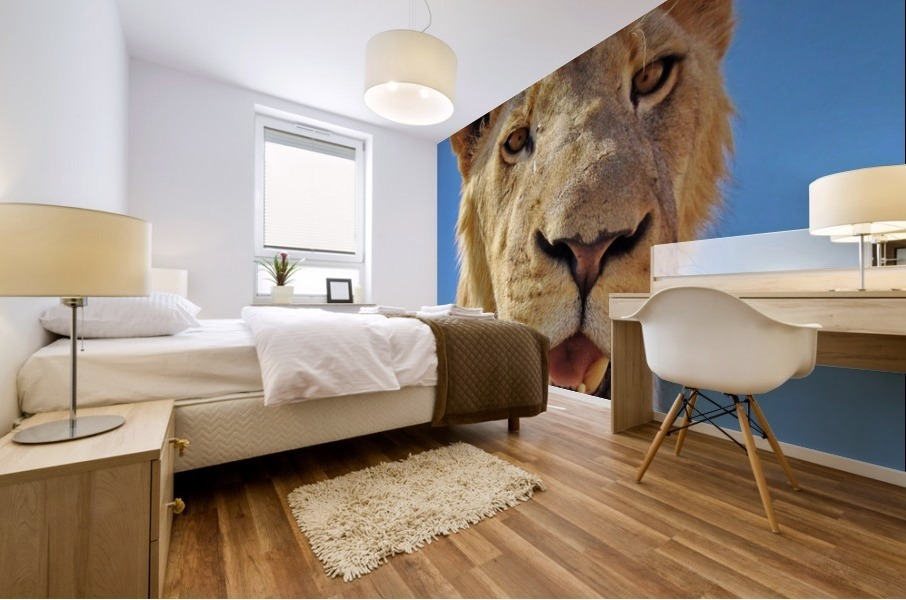 Lion close up square Mural print