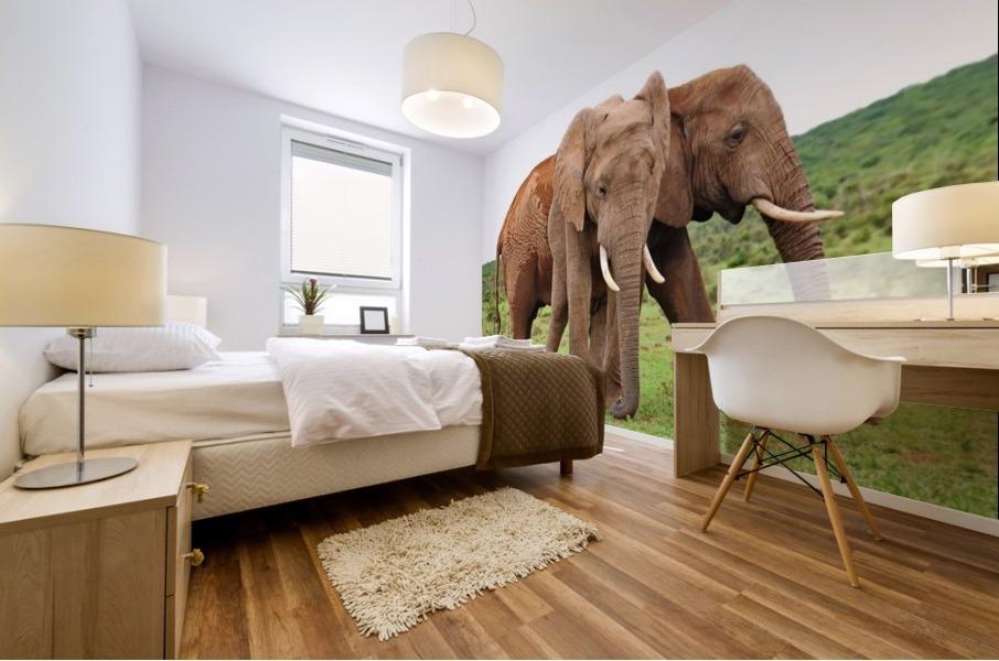 Addo Elephants 45 Mural print