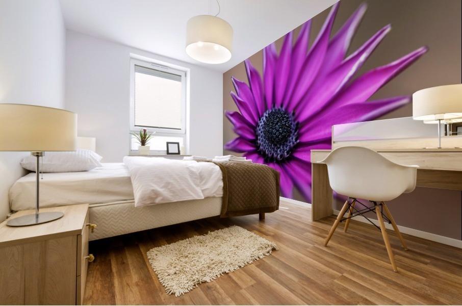 Purple Daisy Mural print