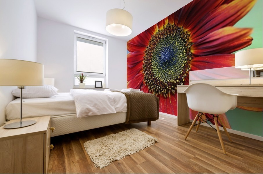 Red Sunflower With Yellow Tips Mural print