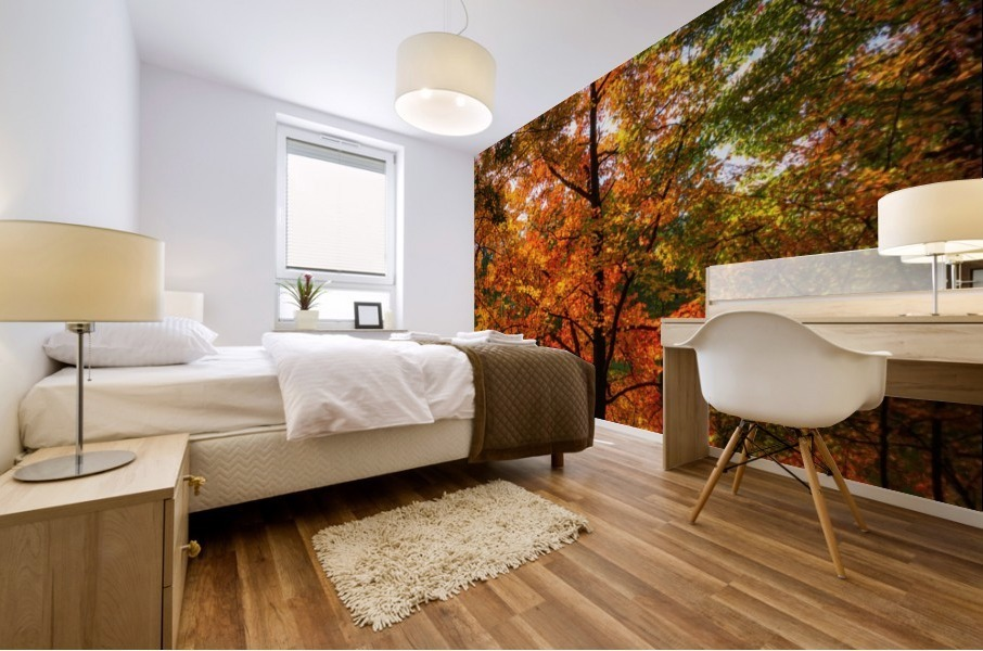 A fall colors tree Impression murale
