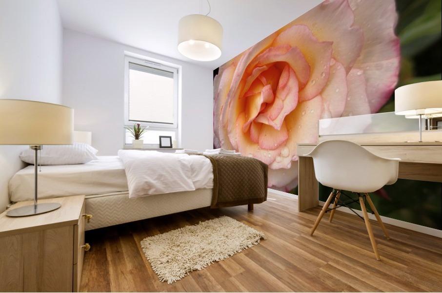 Peach Rose Mural print