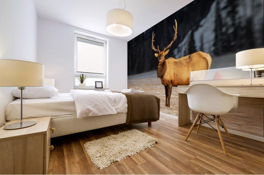 Bull Elk Mural print