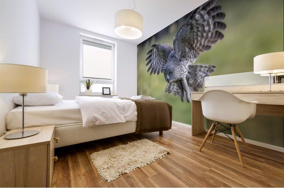 Great Grey Owl - Incoming Mural print