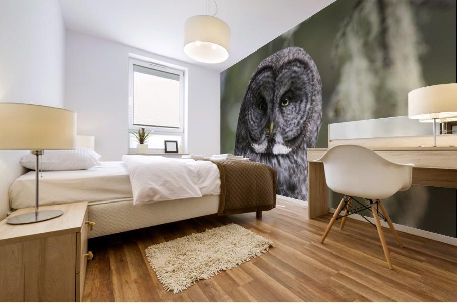 Great Grey Owl - Eye to Eye Mural print