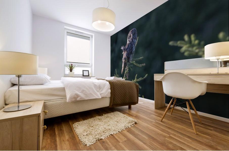Great Grey Owl - Tree Top Hunting Mural print