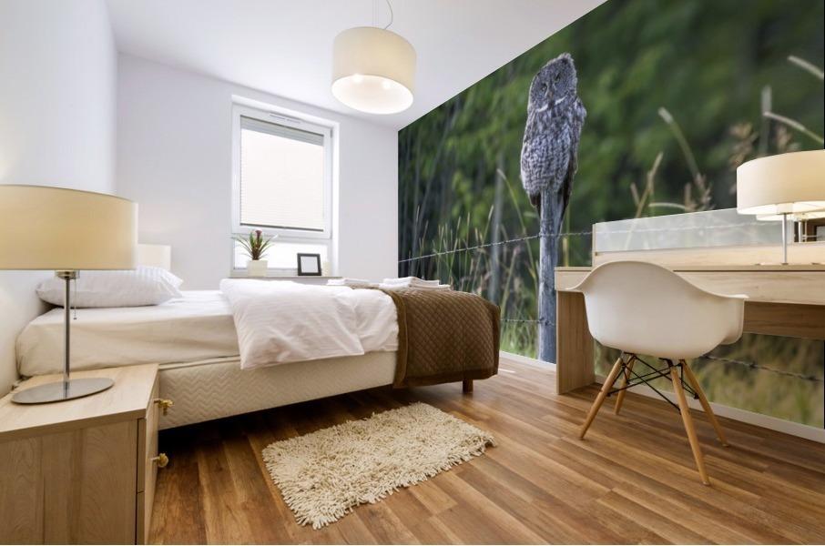 Great Grey Owl - Henry Mural print
