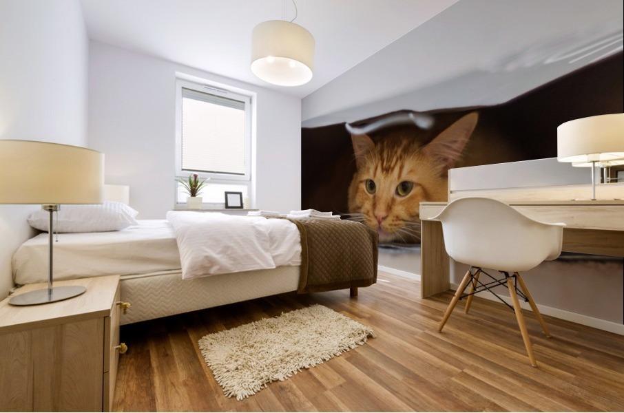 Cat In The Bag Impression murale