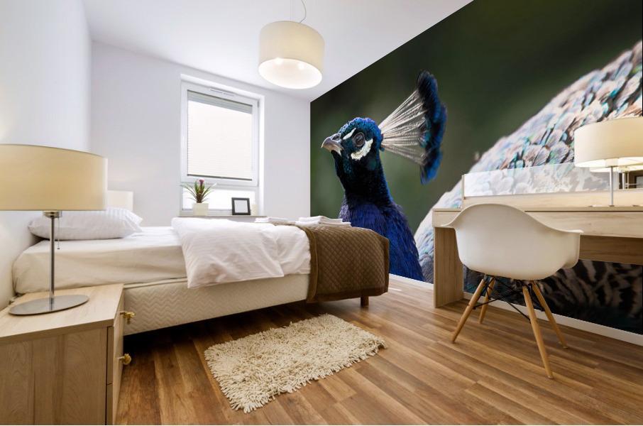Peacock Mural print