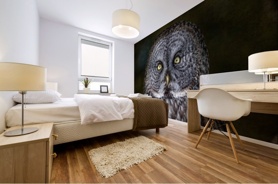 Stare Down with a Great Grey Owl Mural print