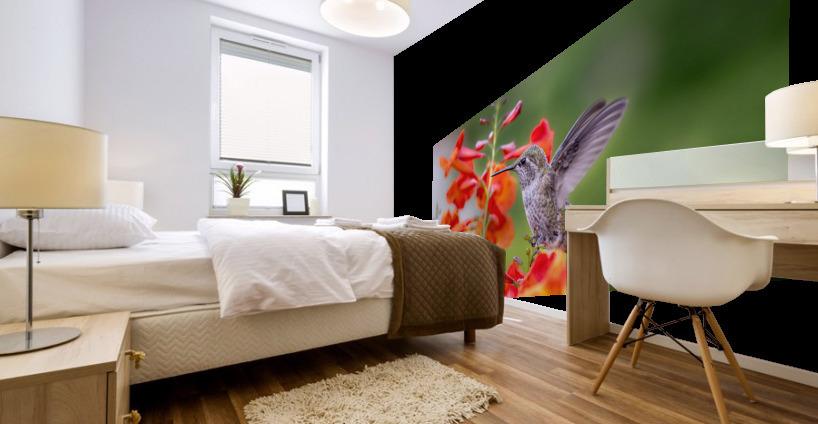 Hummingbird Mural print