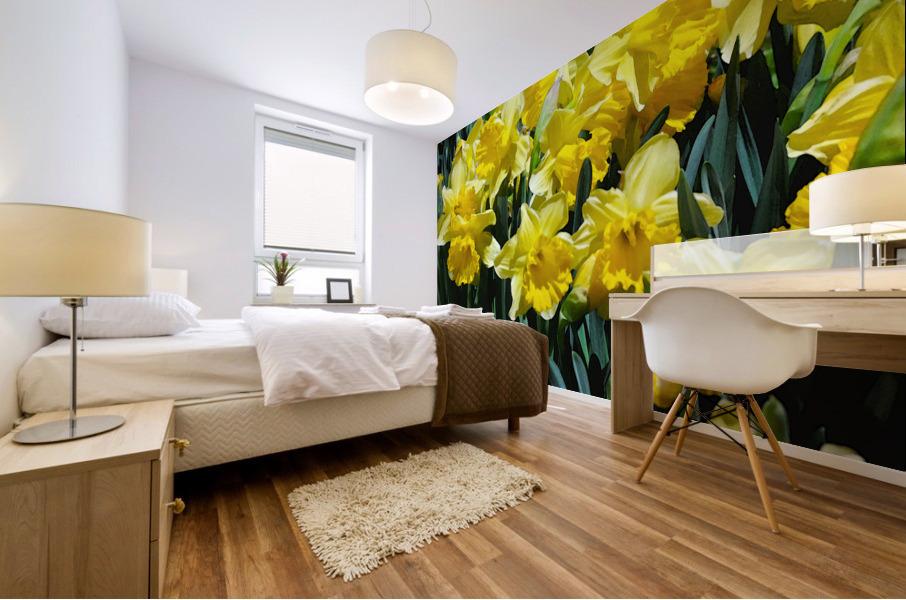 Yellow Daffodils wc Mural print
