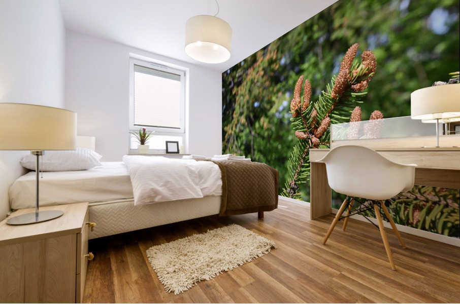 Spruce twig and background Mural print