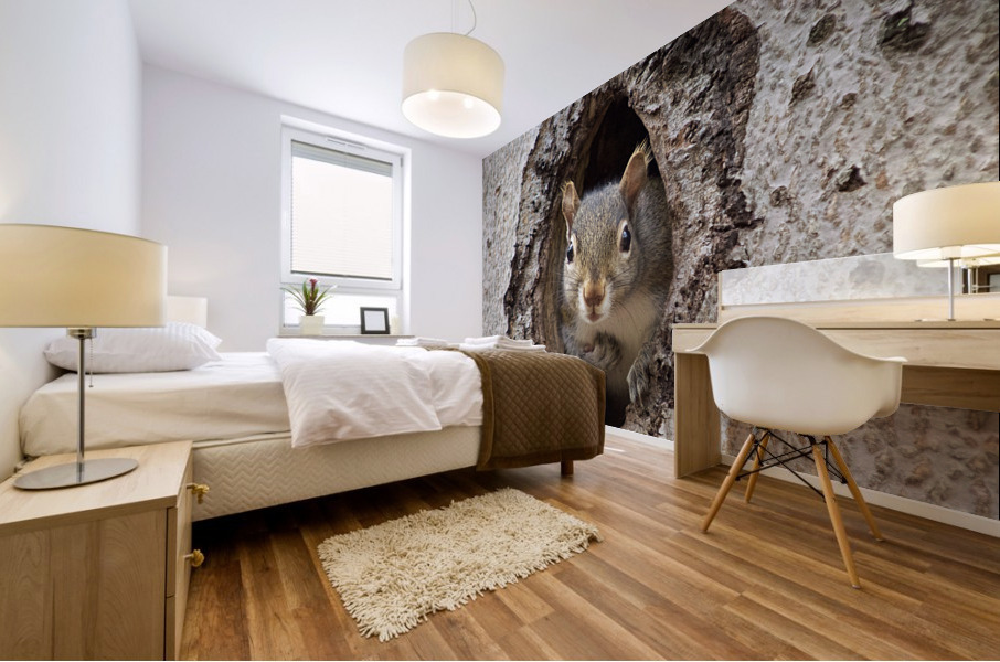 Squirrel in tree hole Mural print