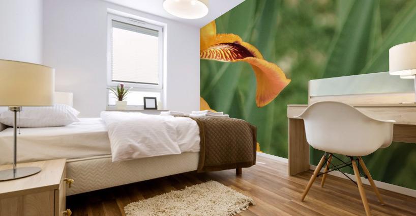 Yellow Brown Iris Mural print
