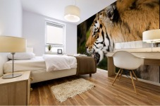 Tiger Mural print