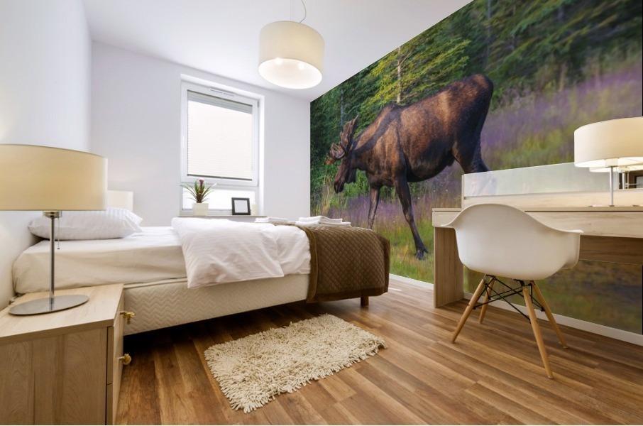 Bull moose in velvet, Kincaid Park, Anchorage, Southcentra Alaska, summer Mural print