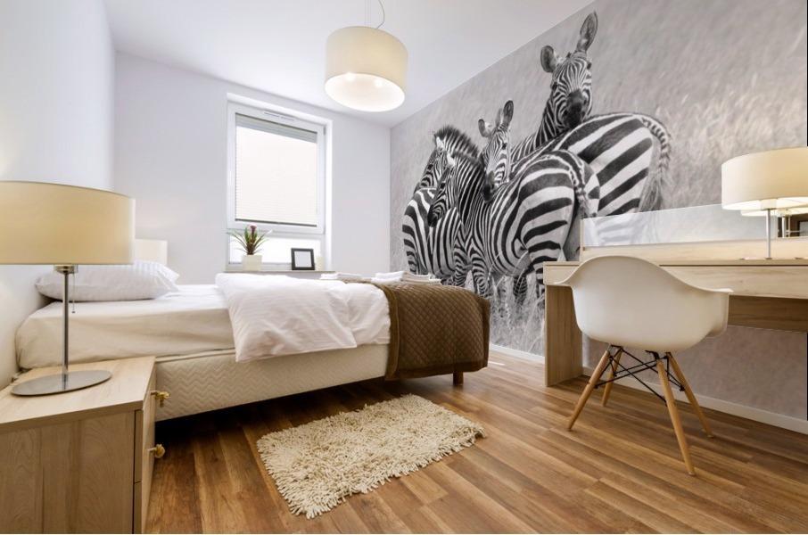 Zebras Mural print