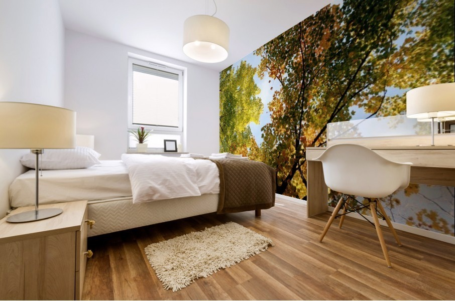Autumn Trees Low-Angle Mural print