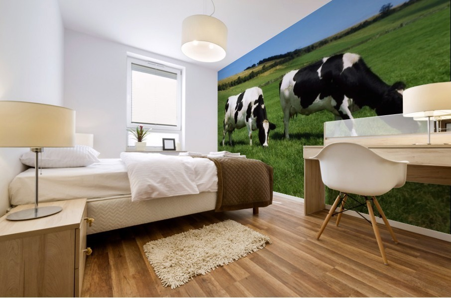 County Cork, Ireland, Dairy Cattle Mural print